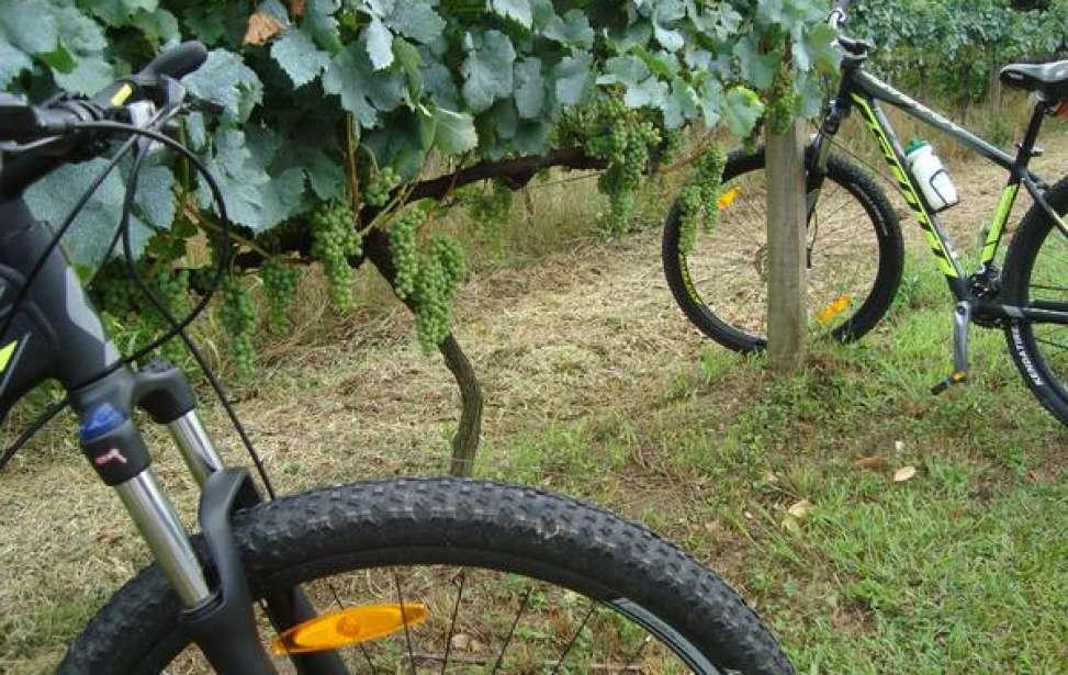 Bikers Rio pardo | Notícia | 3 | Vale dos Vinhedos une cicloturismo, vinhos e gastronomia na Serra Gaúcha
