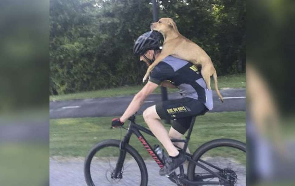 Bikers Rio Pardo | Notícia | Ciclista dá carona para cachorrinho atropelado e abandonado