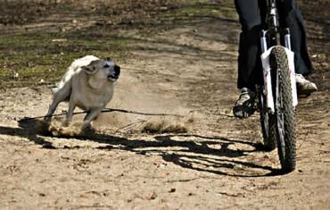Bikers Rio pardo | Dica | O que fazer quando um cachorro corre atrás da sua bicicleta?